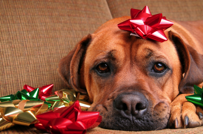 dog-with-holiday-blues1