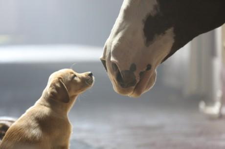 Budweiser-Puppy-Love-Image-1024x682-600x399