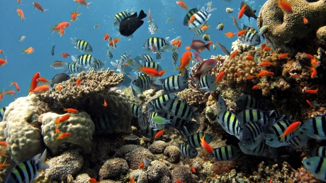 coral-reef-pictures
