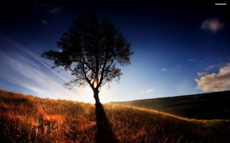 lone-tree-in-the-field-378-2560x1600