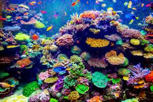 Colorful coral reef.jpg.824x0_q71_crop-scale